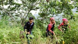 Đồng bào dân tộc thiểu số trồng rừng, bảo vệ rừng được hỗ trợ bao nhiêu tiền?