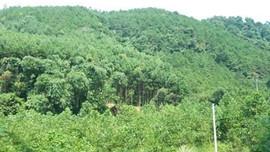 Lạng Sơn: Ứng dụng GIS trong quản lý, bảo vệ rừng