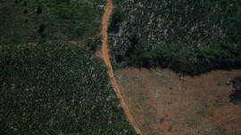 Liên Hợp Quốc kêu gọi các nước tăng đầu tư bảo vệ đa dạng sinh học