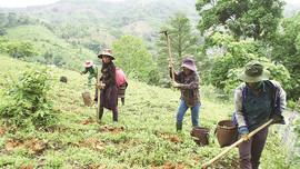 Đề xuất sửa đổi, bổ sung về giao đất, cho thuê đất