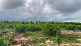Quảng Bình: Nhiều sai phạm trong quản lý đất rừng tại Lâm trường Vĩnh Long
