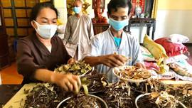 Tổ Đình Minh Hưng Tự trồng dược liệu làm thuốc chữa bệnh và tạo mảng xanh đô thị