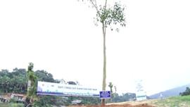 Xây dựng đề án để trồng 1 tỷ cây xanh