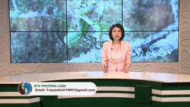 Bản tin truyền hình Tài nguyên và Môi trường số 2/2021 (số 169)