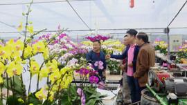 Hoa lan tràn ngập thị trường Tết Tân Sửu 2021