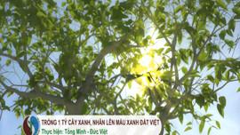 Trồng 1 tỷ cây xanh, nhân lên màu xanh đất Việt