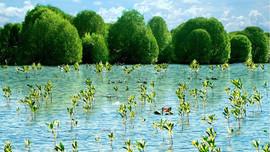 Đề xuất thành lập mạng lưới các khu Ramsar Việt Nam