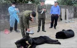 Chuyển giao toàn bộ gấu nuôi tại Quảng Ninh về Trung tâm cứu hộ