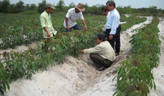 Gio Linh (Quảng Trị): Chủ động ứng phó với biến đổi khí hậu trong sản xuất nông nghiệp