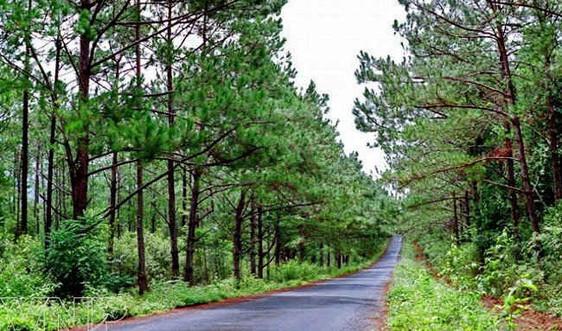 Chi trả DVMTR tại Kon Tum: Phát triển rừng và bảo vệ môi trường sinh thái
