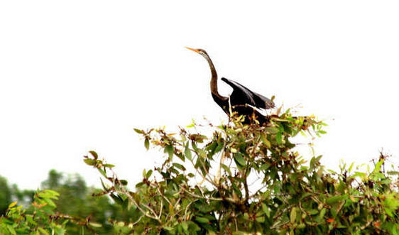 U Minh Thượng trở thành Khu Ramsar thứ 2228 của thế giới