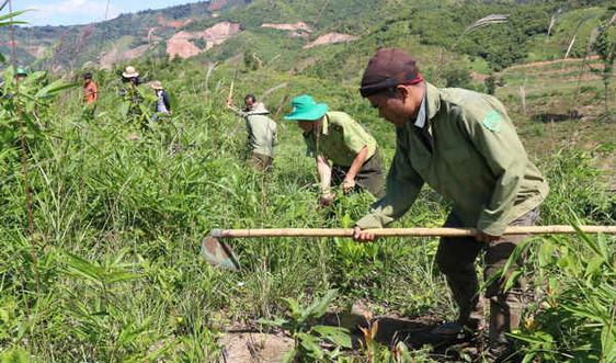 Chi trả DVMTR tại Đắk Nông: Đảm bảo công khai, minh bạch