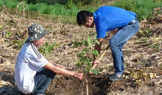 Sơn La: Trồng hơn 125.000 cây phân tán nhân dịp Tết Đinh Dậu 2017