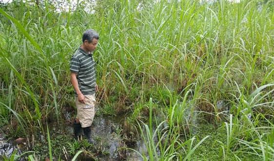 Quảng Nam: Kêu trời vì trang trại heo gây ô nhiễm