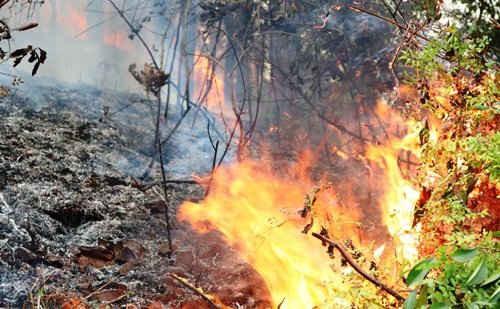 Đồ Sơn – Hải Phòng: Cháy  rừng, một người thiệt mạng