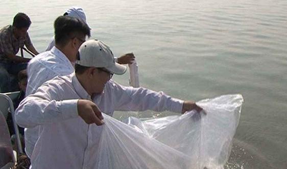 Cà Mau: Thả hơn 300.000  giống tái tạo nguồn lợi thủy sản