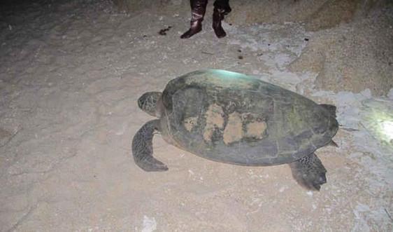 Chương trình tình nguyện viên bảo tồn rùa biển 2017