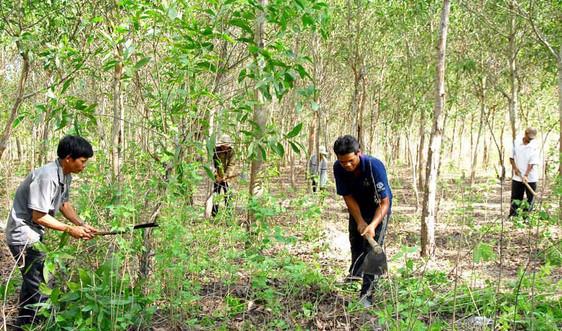 Quảng Trị: Quần chúng tích cực tham gia phòng cháy rừng