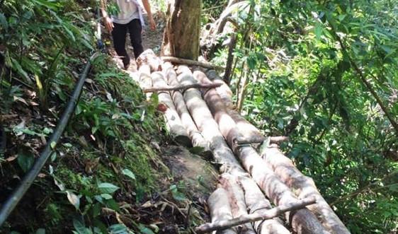 Rừng Khe Đương bị phá tan nát, chính quyền nói chỉ là tin đồn?