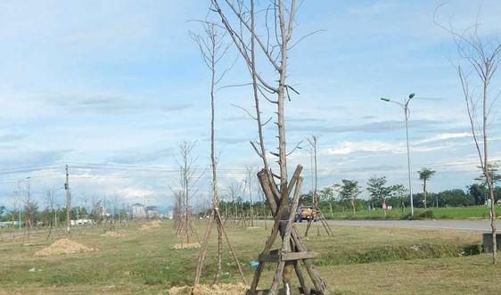 TP. Huế: Hàng loạt cây xanh chết khô dọc tuyến đường Tố Hữu