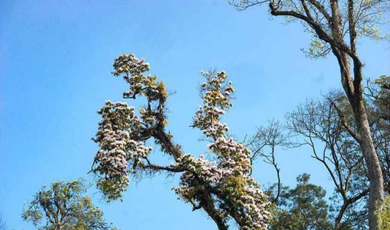 Lào Cai: Thành lập Ban Quản lý Khu bảo tồn thiên nhiên Bát Xát