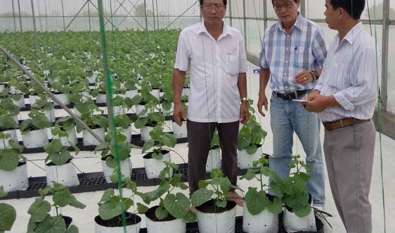 Phú Yên: Xây dựng 09 HTX theo hướng nông sản sạch