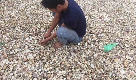 Kiến Thụy - Hải Phòng: Ngư dân nuôi ngao 'kêu cứu' vì nạn khai thác cát
