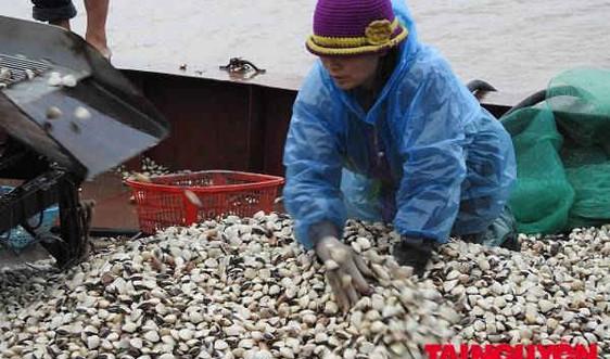 Kiến Thụy – Hải Phòng: Một ngày cùng ngư dân đánh bắt ngao ở cửa sông Văn Úc