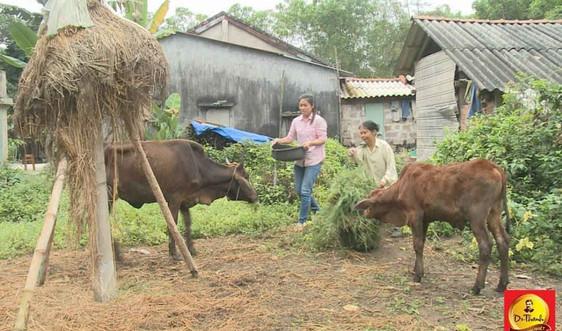 Những cặp bò giống góp phần tích cực vào công cuộc xóa đói giảm nghèo