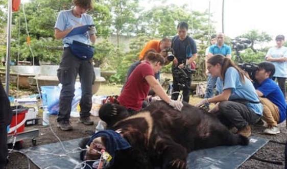 Ninh Bình: Giải cứu 2 cá thể gấu bị nuôi nhốt suốt 13 năm