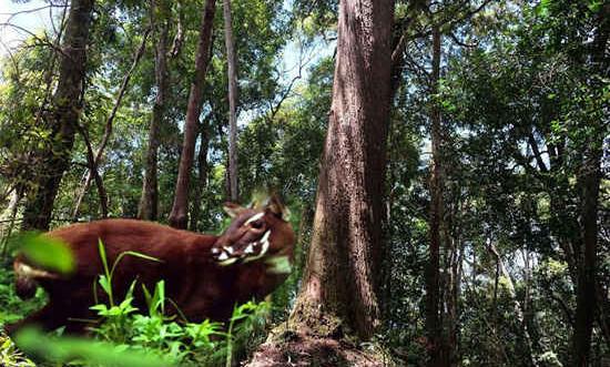 Quảng Nam: Nghiêm cấm chặt hạ cây rừng để khai thác lâm sản ngoài gỗ