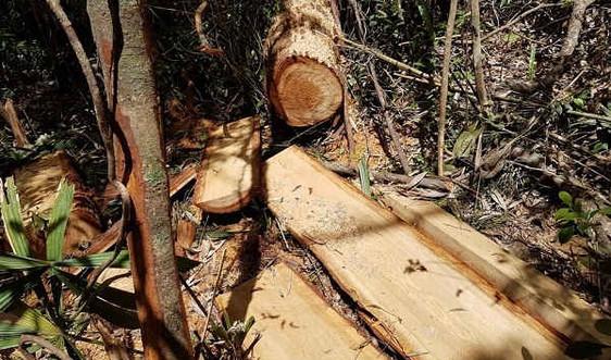 Đà Nẵng: Xử lý nghiêm các vi phạm về quản lý, bảo vệ và phòng cháy, chữa cháy rừng