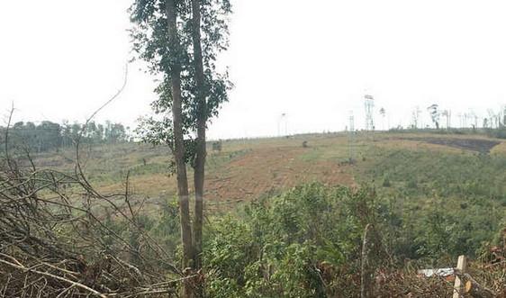 Đắk Song (Đắk Nông): Tập trung xây dựng các phương án sử dụng đất rừng được bàn giao
