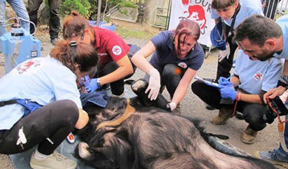 Thái Nguyên: Người dân tự nguyện chuyển giao hai cá thể gấu đến Cơ sở bảo tồn gấu Ninh Bình