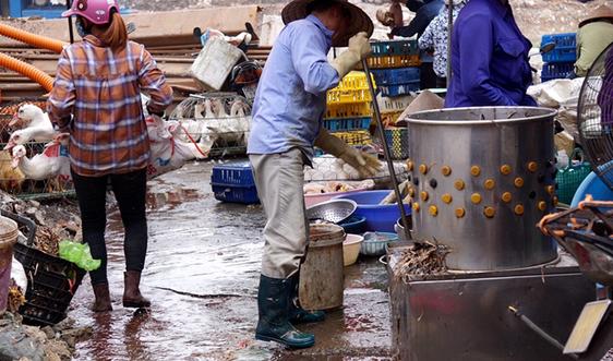 Quản lý giết mổ gia cầm tại các chợ ở Hải Phòng còn lỏng lẻo
