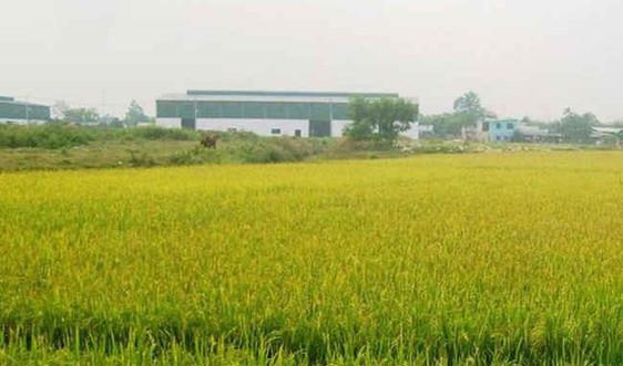 Điều kiện chuyển từ đất trồng lúa sang đất trồng cây lâu năm