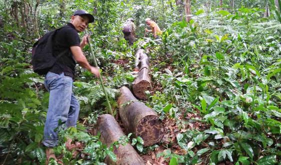 """Vụ rừng phòng hộ Phú Lộc """"chảy máu"""": Hai trạm trưởng bị đình chỉ công tác"""