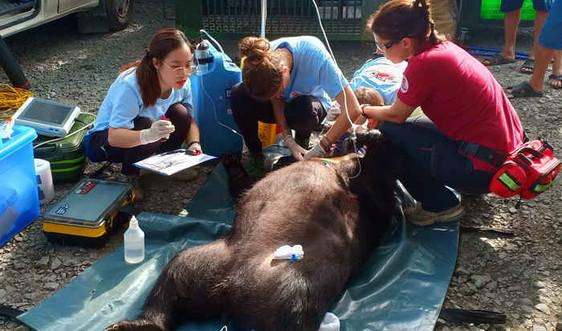 Bến Tre: Đưa cá thể gấu về thiên nhiên