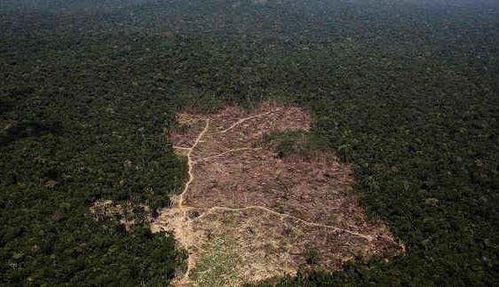 Rừng Amazon đang bị phá hủy với tốc độ chưa từng thấy trong thập kỷ qua
