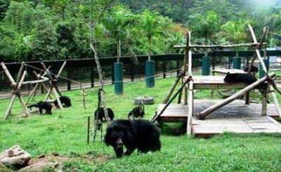 Nuôi dưỡng thành công 22 cá thể gấu ngựa