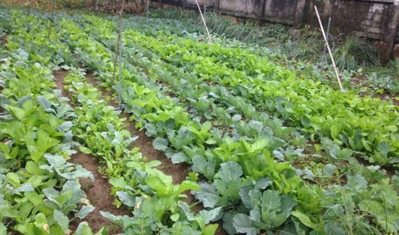 Vườn hộ gia đình - Mô hình hay về đảm bảo an toàn dinh dưỡng