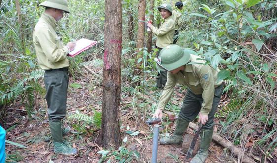 Cấp chứng chỉ rừng – Giải pháp quản lý rừng bền vững