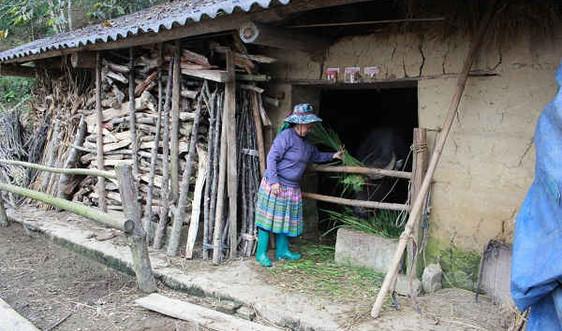 Lào Cai: Triển khai phương án phòng chống rét cho gia súc và cây trồng