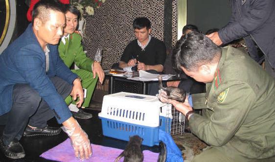 Hải Phòng: Giải cứu 2 cá thể gấu ngựa đang bị đem bán