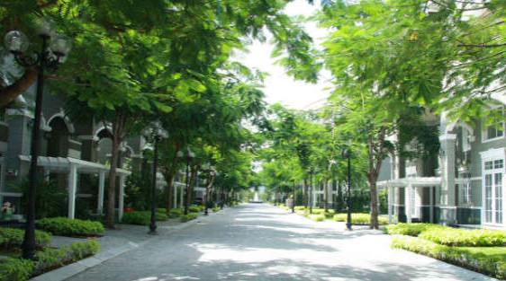 Hà Nội: Phát triển bền vững hệ thống cây xanh đô thị