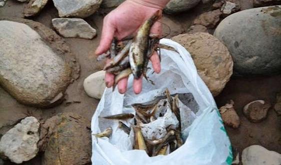 Lào Cai: Cá trên sông Hồng chết bất thường chưa tìm ra nguyên nhân