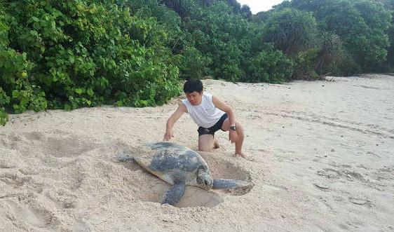 Khởi động chương trình bảo tồn rùa biển 2019