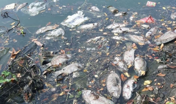 Đà Nẵng: Xử lý tình trạng xả thải làm cá chết hàng loạt trên sông Phú Lộc