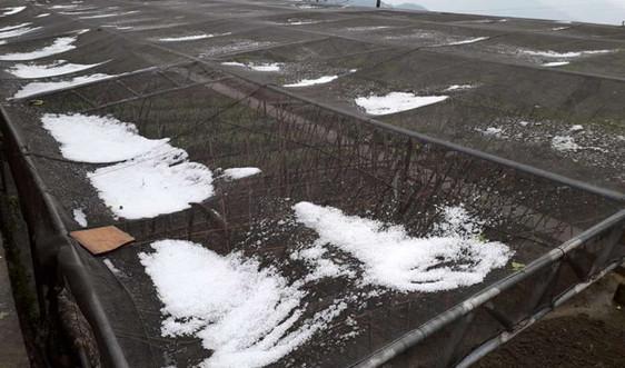 Bắc Bộ và Trung Bộ: Đề phòng lốc, sét, mưa đá và gió giật mạnh