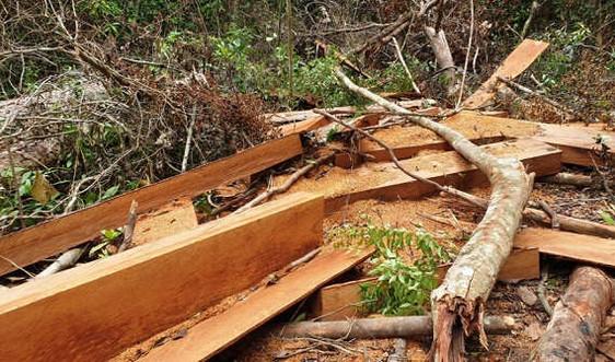 Quảng Nam: Phát hiện vụ phá rừng ở Bắc Trà My với hơn 25m3 gỗ